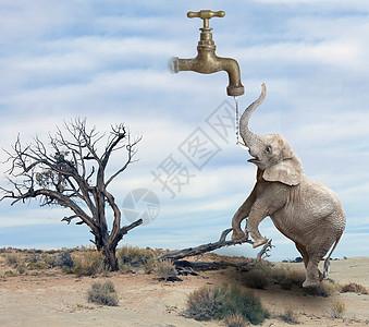 喝水的大象图片