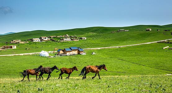 策马崩腾的夏季新疆大草原图片