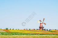 牛角大圩的花海与荷兰风车图片