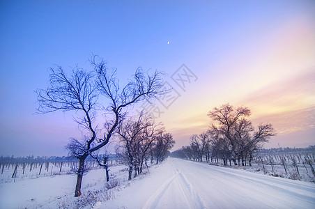冬季枯树雪晚霞图片