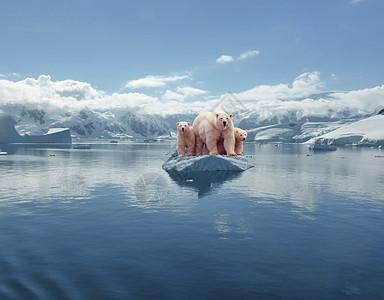 冰上的北极熊图片