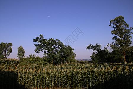 故乡的蓝天图片