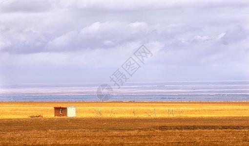 新疆草原金黄色图片