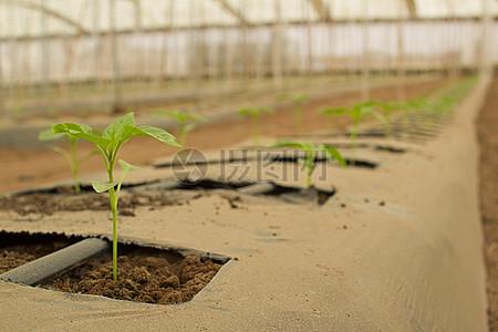 蔬菜种植图片