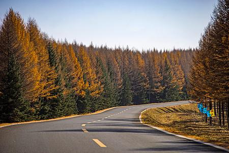 林间公路图片