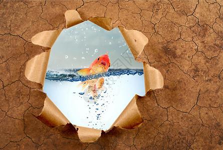 在干旱中挣扎的鱼图片