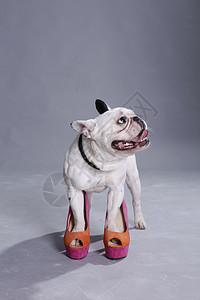 穿高跟鞋的狗狗图片
