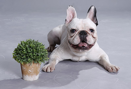 趴在地上的狗狗图片