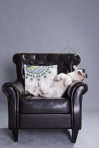躺在沙发上的狗狗图片