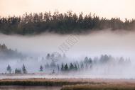 森林朦胧晨雾图片