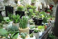 多肉植物盆栽图片