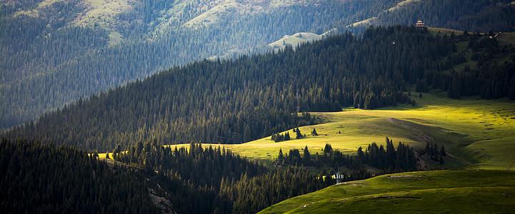 赛里木湖树林图片