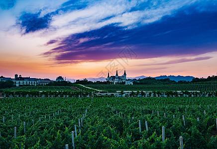 晚霞下的城堡和葡萄园图片