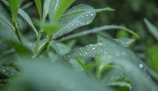 晴天娃娃图片_雨季图片_雨季图片大全_雨季背景图片