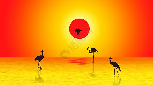 夕阳下的鹤图片