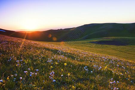 野山花日落逆光图片