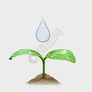 水滴嫩芽图片