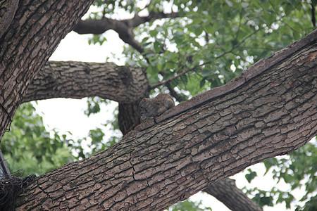 西湖松鼠图片