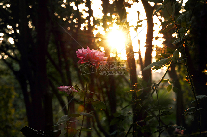 一缕阳光图片