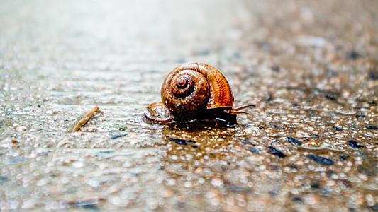 雨天里的蜗牛图片