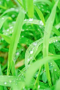 夏天-雨水与植物图片