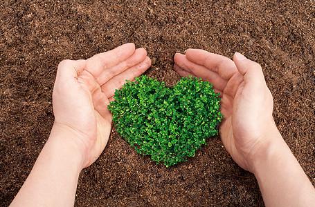 环境保护小树苗图片