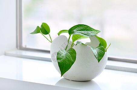 净化空气的草本植物图片