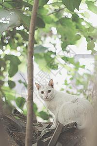 树叶下面的白色大猫图片