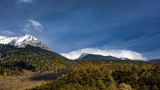 香格里拉石卡雪山下的高原森林图片