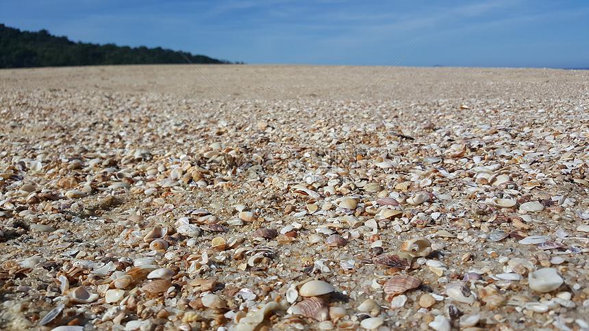 标签: 海边贝壳阳光海洋沙滩晴朗沙子旅游景点沙滩上的贝壳图片沙滩
