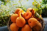 夏日水果诱人多汁黄桃图片