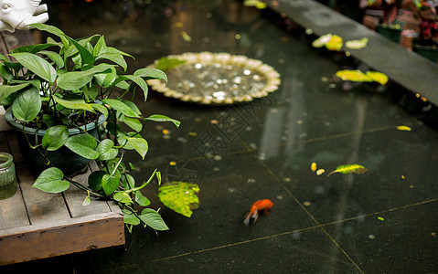 水池中的鱼图片