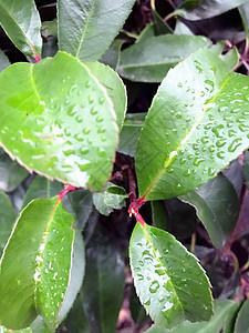 立夏后的雨季图片