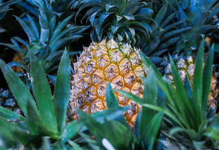 夏季多彩的水果图片