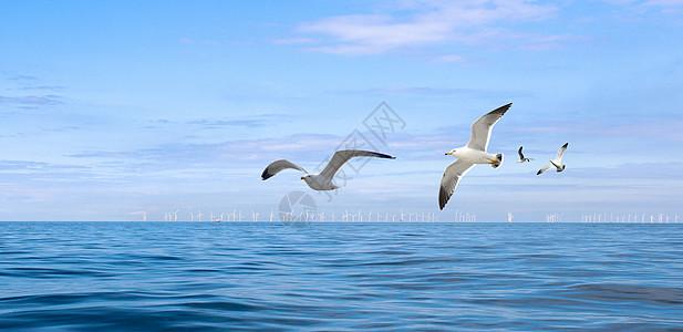 海上的海鸥图片