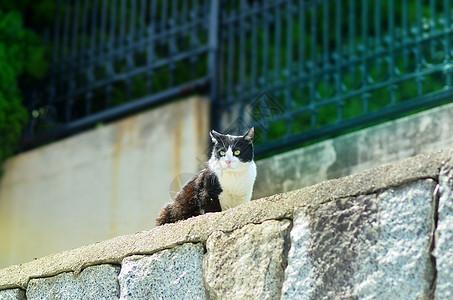 流浪猫图片