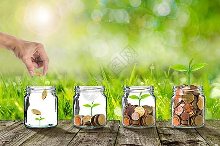 木板上存钱罐里的绿叶图片