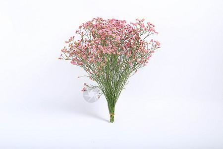 云南干花图片