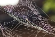 蜘蛛网图片