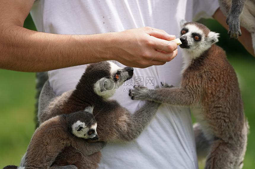 动物园里的猿猴摄影图片免费下载_动物图库大全_编号