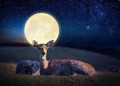 鹿与月亮图片