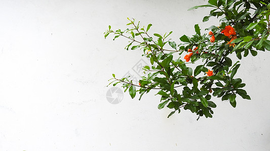 白色复古背景前的绿树红花图片
