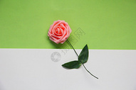 清新鲜花拼色背景素材图片