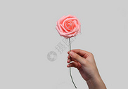 手拿玫瑰花背景素材图片