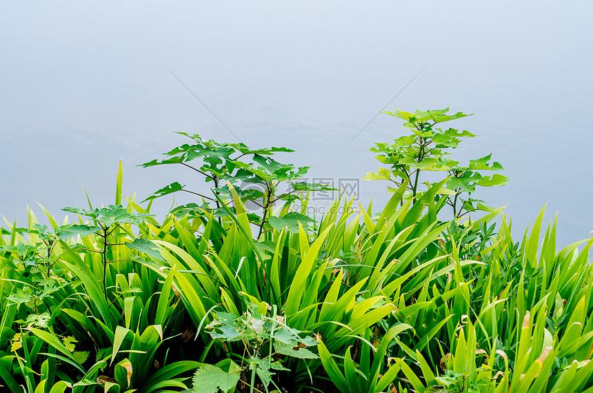 夏天的花草与植物摄影图片免费下载_花草树木图库大全图片