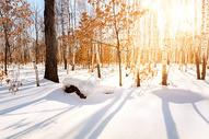 冬天积雪森林图片