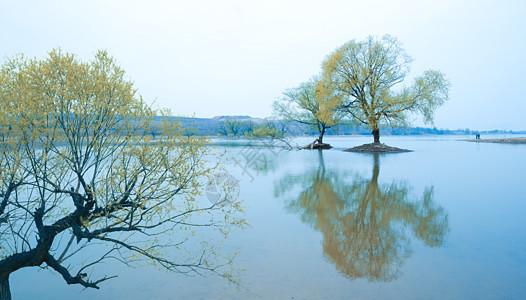水中树图片