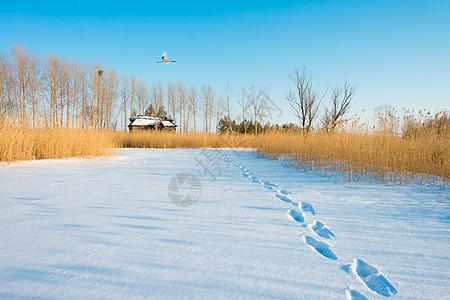 雪地里的一串脚印图片