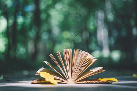 叶子与日记本图片