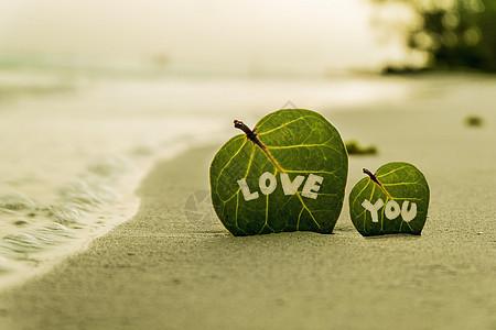 海滩上的树叶图片